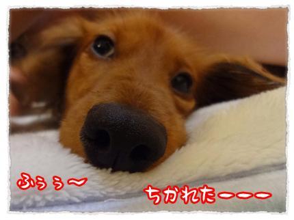 2012_2_28_8_convert_20120228232850.jpg