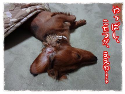 2012_2_29_2_convert_20120229234303.jpg