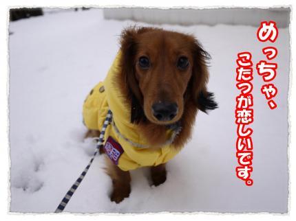 2012_2_29_5_convert_20120229234346.jpg