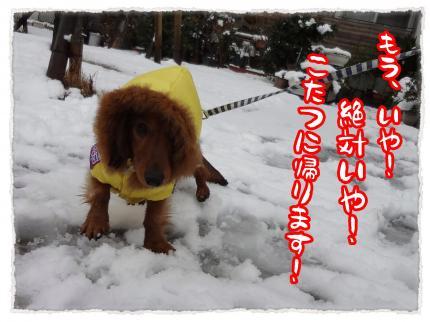 2012_2_29_7_convert_20120229234418.jpg