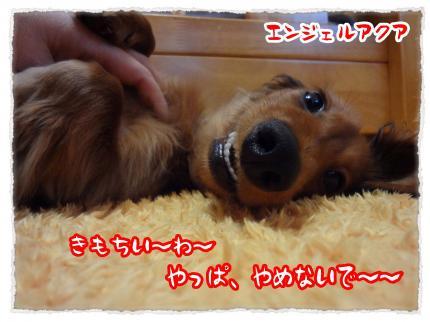2012_2_2_6_convert_20120302230512.jpg