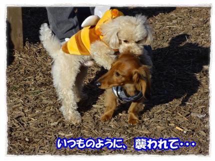 2012_2_4_6_convert_20120204231648.jpg