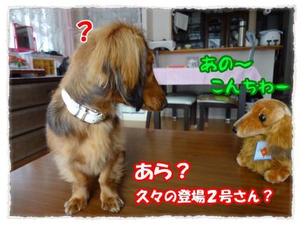 2012_2_8_1_convert_20120208220821.jpg