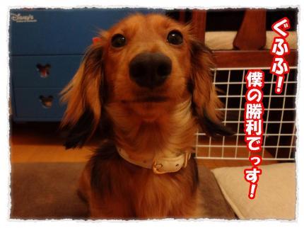 2012_3_10_5_convert_20120310232349.jpg