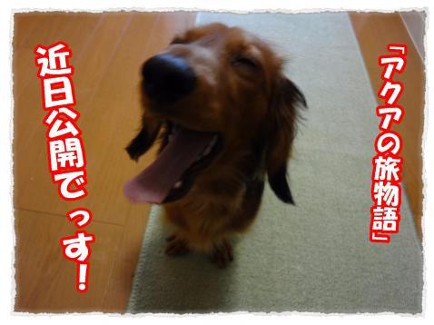 2012_3_14_1_convert_20120314234152.jpg