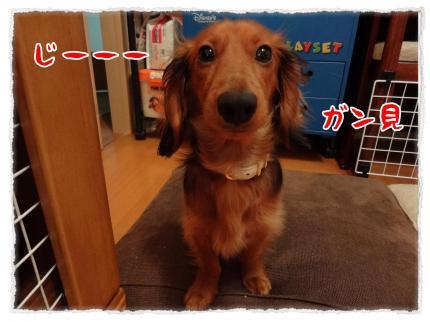 2012_3_17_1_convert_20120317230512.jpg