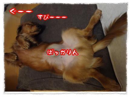 2012_3_17_5_convert_20120317230711.jpg