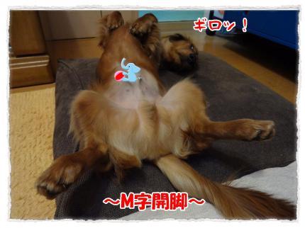 2012_3_17_6_convert_20120317230749.jpg