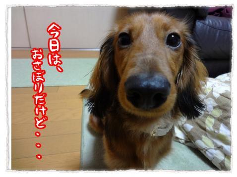 2012_3_21_1_convert_20120321001014.jpg