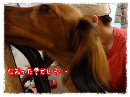 2012_3_24_2_convert_20120324233439.jpg