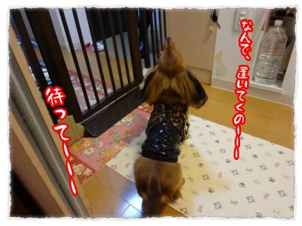 2012_3_24_7_convert_20120324233607.jpg