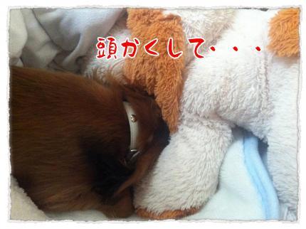 2012_3_28_2_convert_20120328225422.jpg