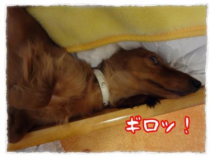 2012_3_28_6_convert_20120328225452.jpg
