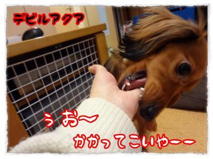 2012_3_2_1_convert_20120302230544.jpg