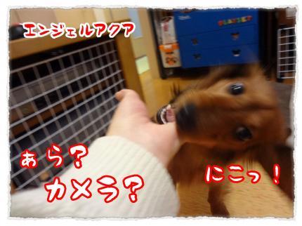 2012_3_2_2_convert_20120302230606.jpg