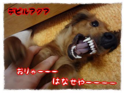 2012_3_2_3_convert_20120302230624.jpg