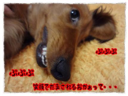 2012_3_2_8_convert_20120302230742.jpg