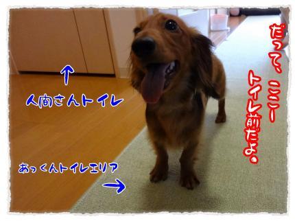 2012_3_30_2_convert_20120330231150.jpg