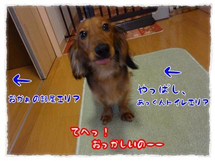 2012_3_30_3_convert_20120330231220.jpg