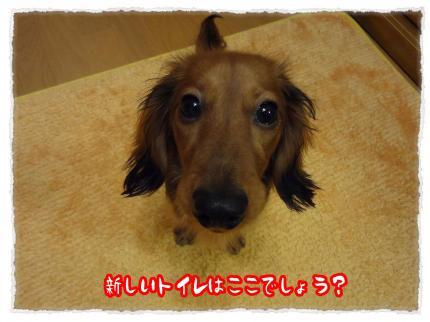 2012_3_30_7_convert_20120330231325.jpg
