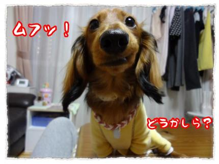 2012_3_31_4_convert_20120331235006.jpg