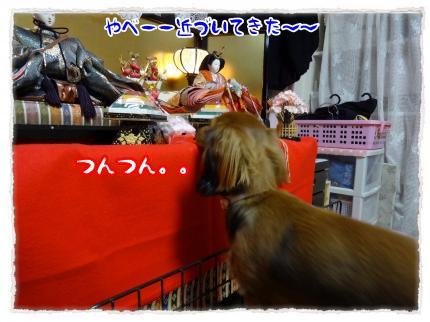 2012_3_3_5_convert_20120303233649.jpg