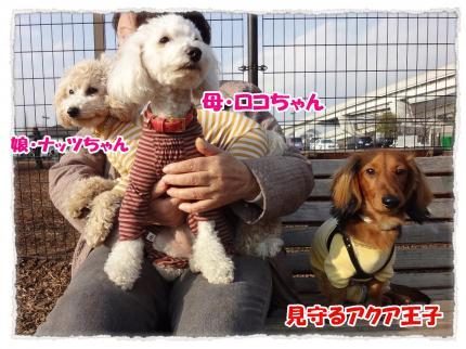 2012_3_4_5_convert_20120304232252.jpg