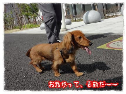 2012_4_10_5_convert_20120410224843.jpg