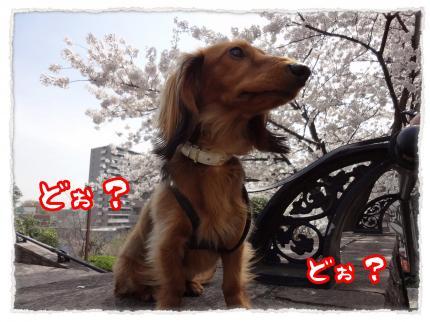 2012_4_10_6_convert_20120410224902.jpg
