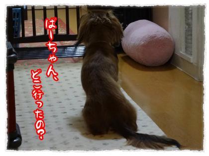 2012_4_12_1_convert_20120412225908.jpg