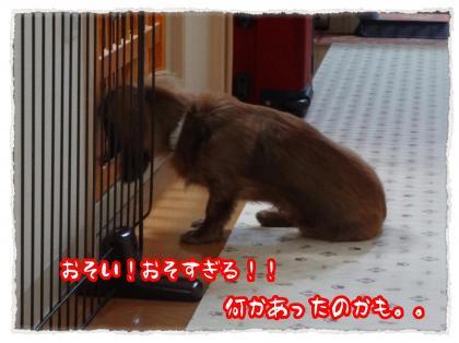 2012_4_12_4_convert_20120412230024.jpg