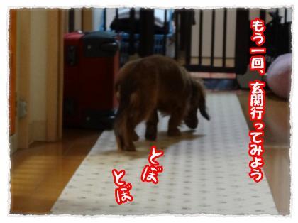 2012_4_12_5_convert_20120412230039.jpg
