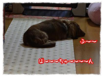 2012_4_12_6_convert_20120412230055.jpg
