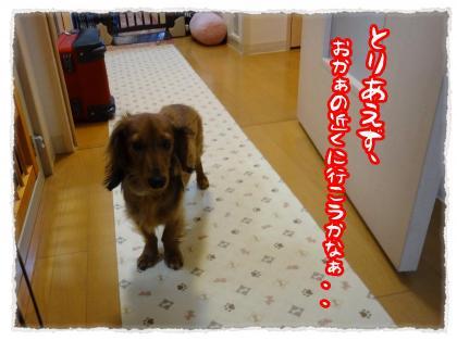 2012_4_12_7_convert_20120412230112.jpg