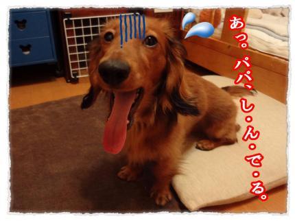 2012_4_14_1_convert_20120414223812.jpg