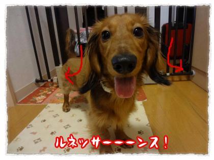 2012_4_22_1_convert_20120422233250.jpg