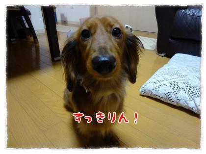 2012_4_22_2_convert_20120422233326.jpg