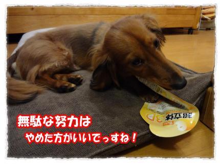 2012_4_24_6_convert_20120424224359.jpg