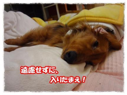 2012_4_25_7_convert_20120425225304.jpg