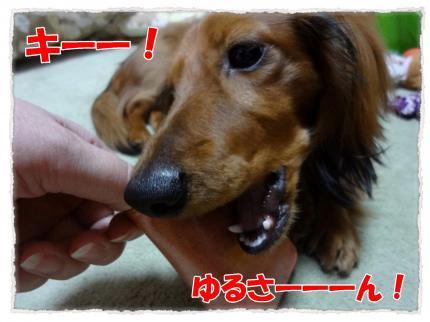2012_4_2_4_convert_20120402233709.jpg
