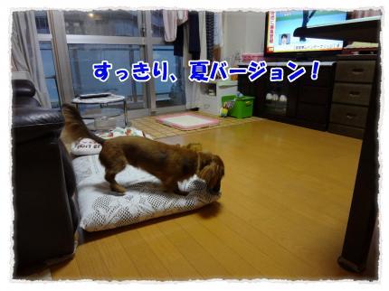 2012_4_3_1_convert_20120403232238.jpg