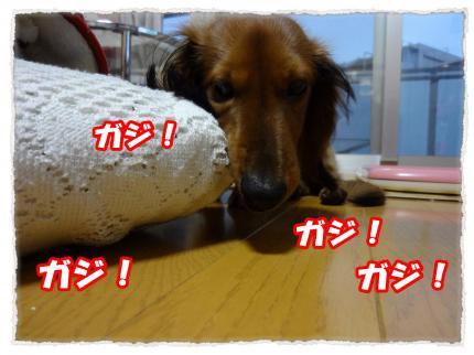 2012_4_3_2_convert_20120403232317.jpg