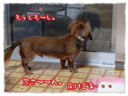 2012_4_3_3_convert_20120403232348.jpg