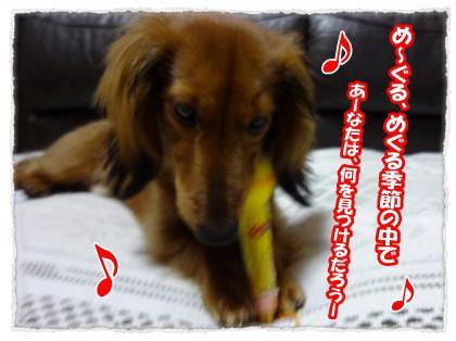 2012_4_4_11_convert_20120404234040.jpg