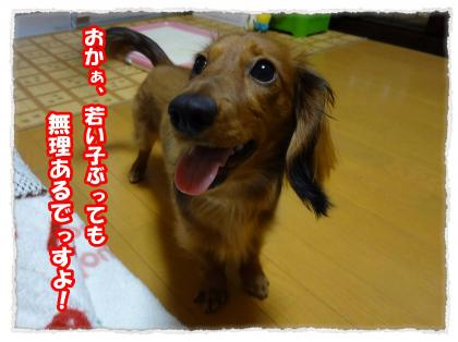 2012_4_4_8_convert_20120404232543.jpg