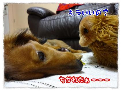 2012_4_5_8_convert_20120405224038.jpg