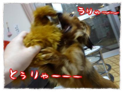 2012_4_5_9_convert_20120405224053.jpg