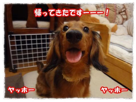 2012_4_6_1_convert_20120406230946.jpg