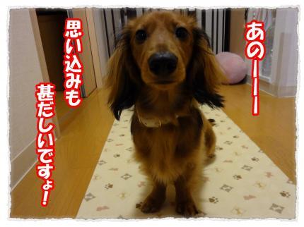 2012_4_7_1_convert_20120407231353.jpg