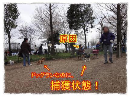 2012_4_7_7_convert_20120407231732.jpg